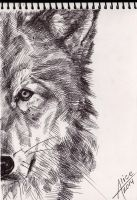 Wolf sketch by joe2508