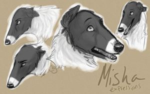 Misha - Expressions by InstantCoyote