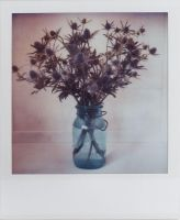 Ball Jar With Thistles by futurowoman