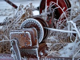 Winter Rime by WayneBenedet