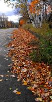 Follow the leaves by Readmeabook21