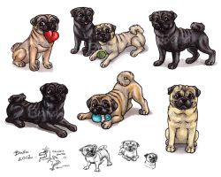 More Pugs by Bafa