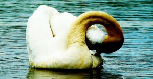 :swan: by mefista