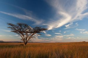 Africa by carlosthe