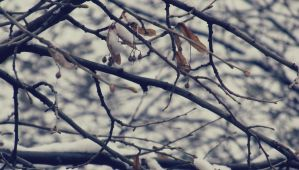 29.Winter by sunny1212