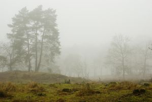 Silent trees in misty land 2 by steppeland