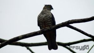 Hawk On The Branch [SHOT 2] by pfgun0
