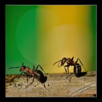Ant and Ant by albatros1