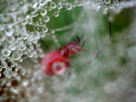 SHELOB LIVES by CorazondeDios