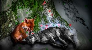 Red Fox and Red Wolf Playing by TMProjection