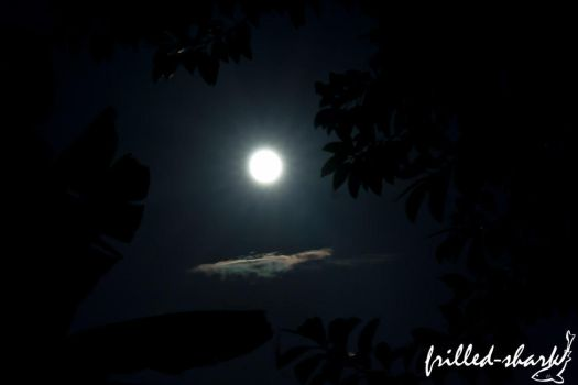 Super Moon by frilled-shark