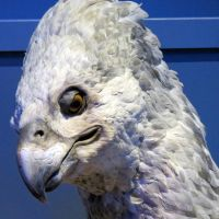 closeup buckbeak the hippogriff  harry potter.tour by Sceptre63