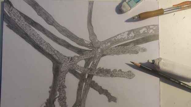 Branches Study by Zeraphinda