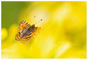 my butterfly by werol