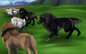 One Black Sheep - Right of Merit - COM by Amiookamiwolf