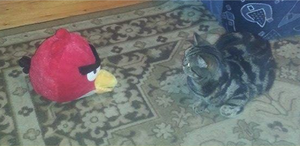 My cat and the red bird! :D by OrochimaruXDD