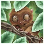 Tabil the tarsier by fllamjr