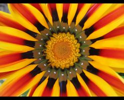 The sun as a flower by Valentin-Stanciu