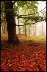 The power of autumn by mjagiellicz