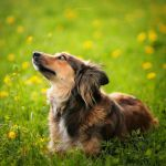 Surrounded By Dandelions by DREAMCA7CHER