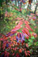 United colours of Autumn by Dunadan-from-Bag-End