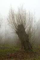 Tree stump in Misty Land by steppelandstock