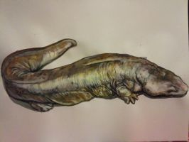 Andrias dividianus (Chinese Giant Salamander) by TheTyro