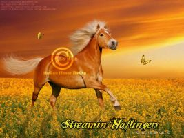 Streamin Haflingers by ExquisArt