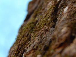 Moss on Tree Macro by livdrummer