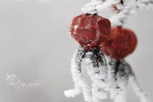 -150- frosty by MiriamPeuser
