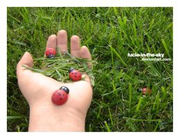 coccinelles by lucie-in-the-sKy
