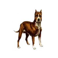 dog 2 trans png by dementiaRunner