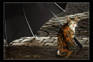 I'll Take The Rain by gilad
