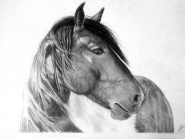 Horse Portrait by Schoerie