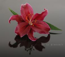 Lily 04 by blancaJP