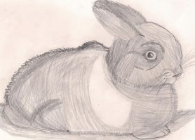 Cottontail by Flame-Wing