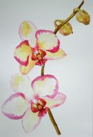 Orchids by Annica22
