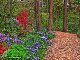 Flowery Path by jim88bro