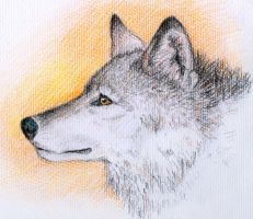 Wolf pencil sketch by heylorlass