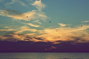 Birds in the sunset by AnSophia