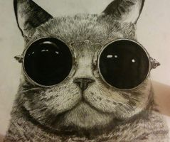cat drawing from reference. by ValentinPAZTELLO