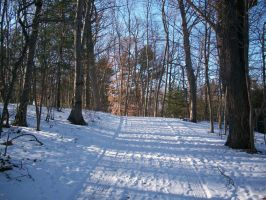 Cold Winter Path by TheBlackSanctuary