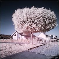 Parking Lot Tree IR by Argolith