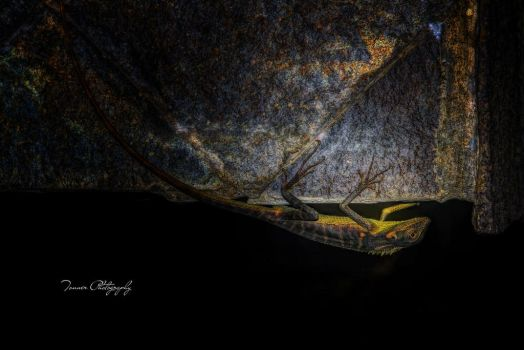 Upside Down Chameleon by tonnerphotography