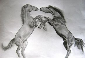 Fighting horses by SergRus