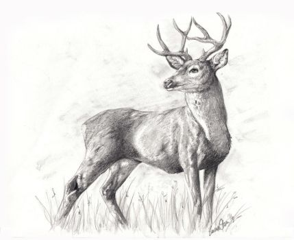 The Buck by avaunt