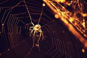Spider by mouzeron