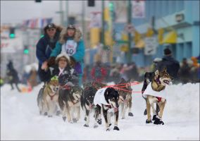 Iditarod The Last Great Race on Earth by Exileden