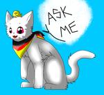 Ask me!! c: by Ask-Prussia-Neko