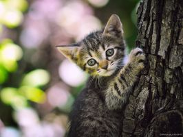 Little climber in the Hood by ZoranPhoto